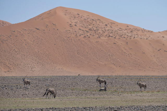 Namibie - Avril 2017 - Page 11 Namibi96