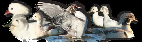 Présentation Des Oiseaux