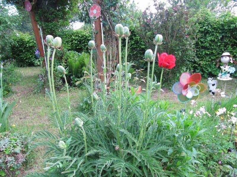en vrac les floraisons du jardin  00121