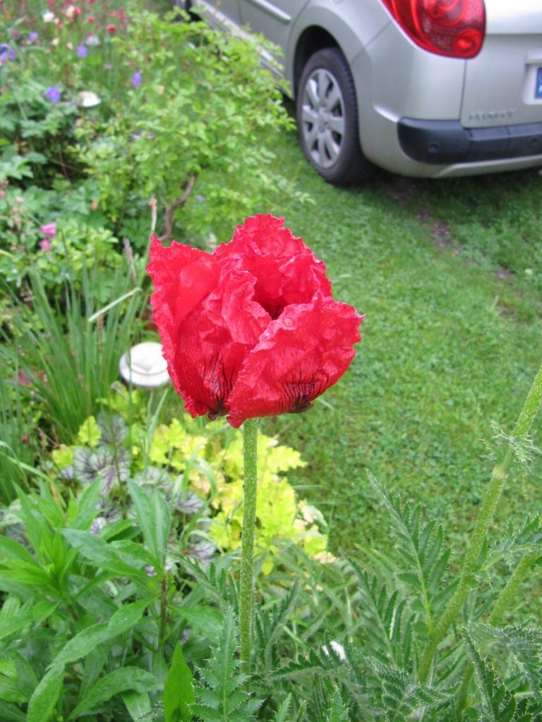 en vrac les floraisons du jardin  00321