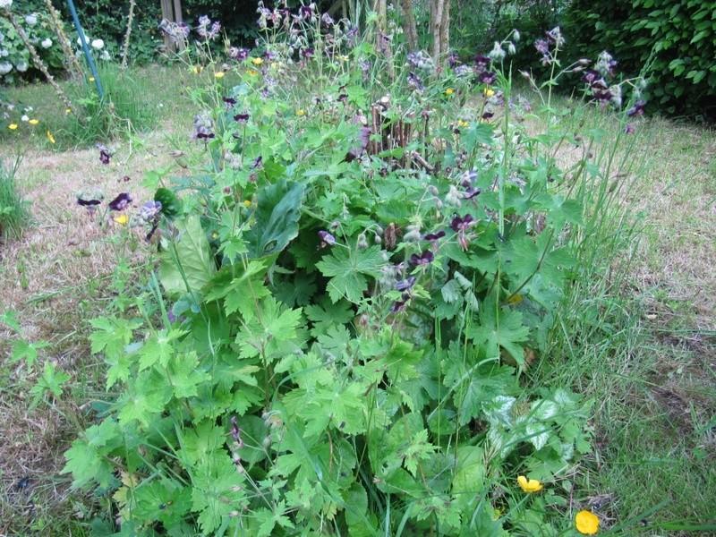 en vrac les floraisons du jardin  00415