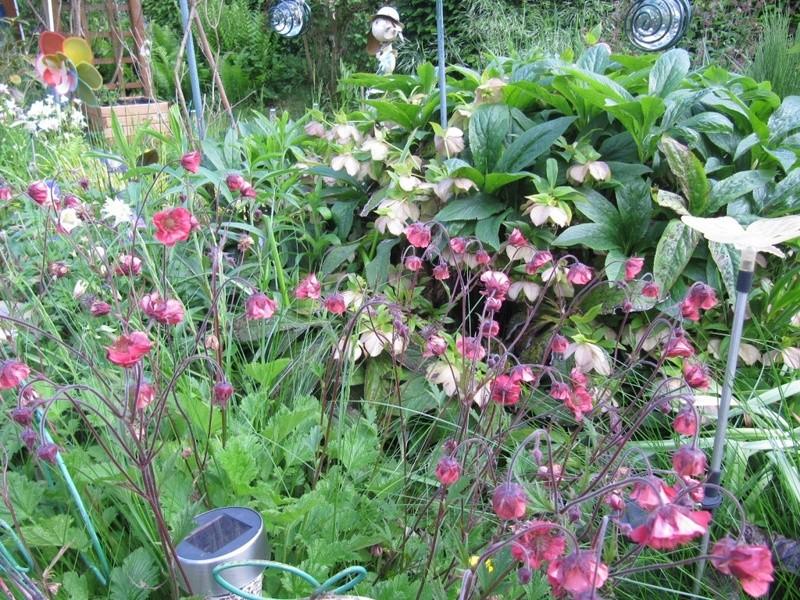 en vrac les floraisons du jardin  00612