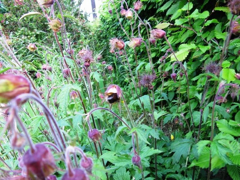 en vrac les floraisons du jardin  01014