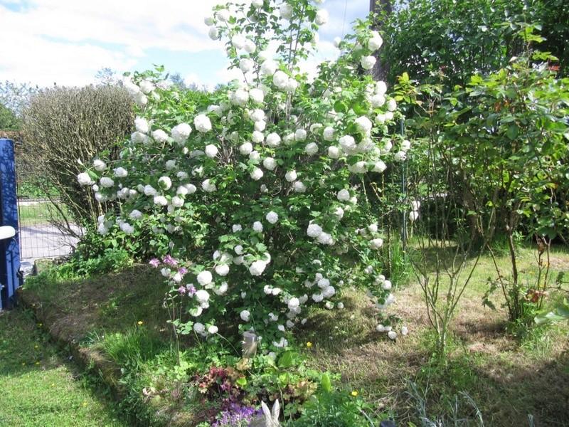 en vrac les floraisons du jardin  01514