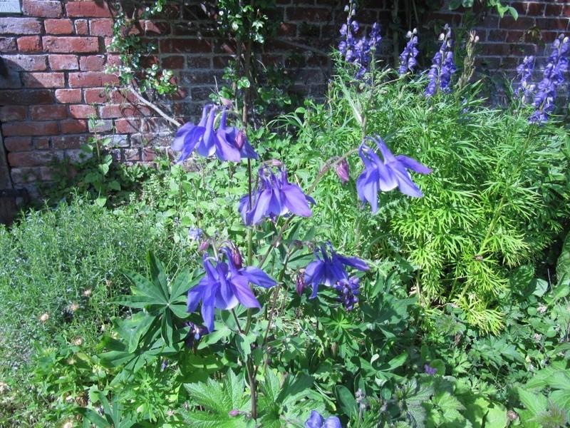 en vrac les floraisons du jardin  01613