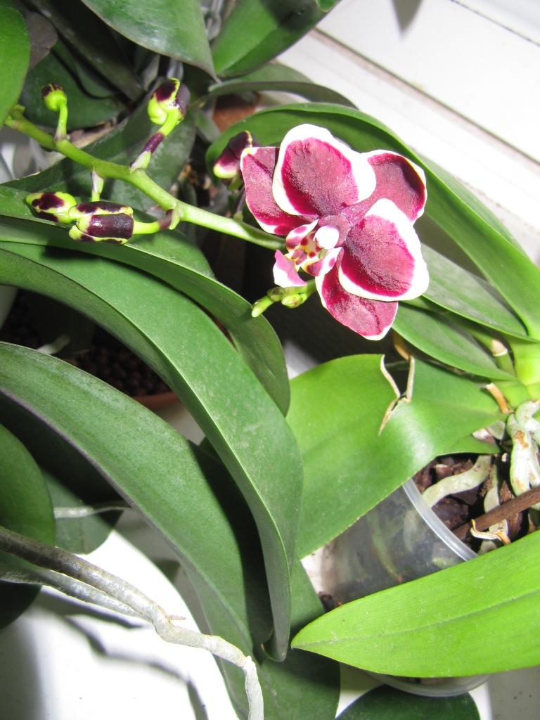 2 orchidées qui me reflerises  03010