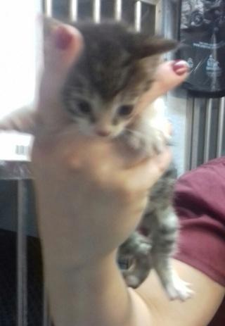 5 chatons de 3 semaines, Var Chaton12