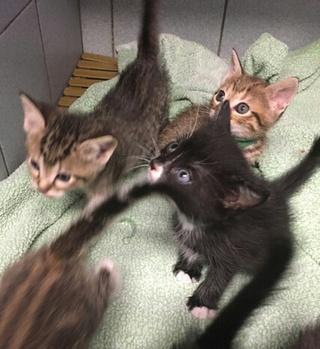7 chatons de 2 mois Var Chaton22
