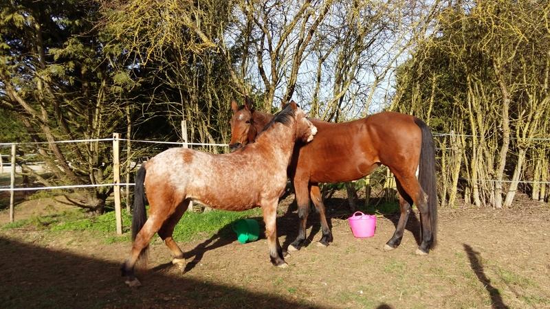 INDIANA - OI type poney née en 1994 - adoptée en juillet 2016 par Adeline 20170210