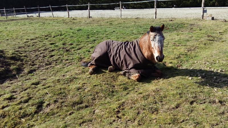 INDIANA - OI type poney née en 1994 - adoptée en juillet 2016 par Adeline 20170211