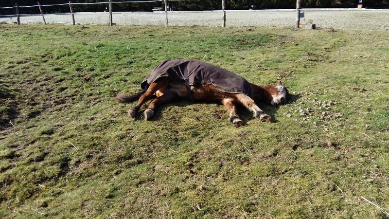 INDIANA - OI type poney née en 1994 - adoptée en juillet 2016 par Adeline 20170212