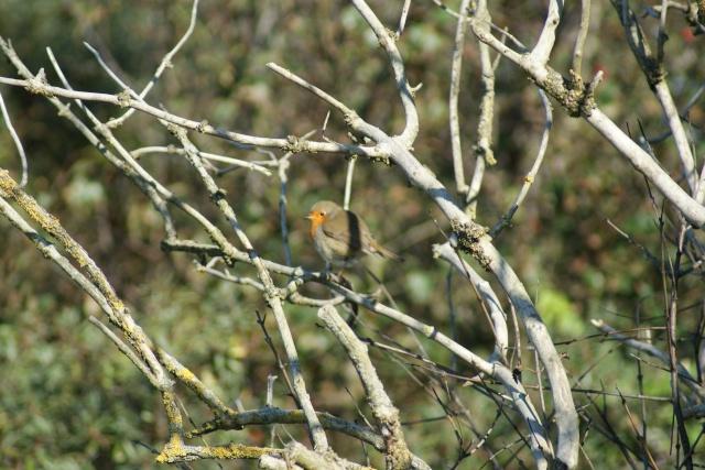 les oiseaux et petites bêtes au cours de nos balades - Page 2 Dsc03011