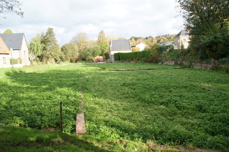 Cresson des jardins Dsc03611