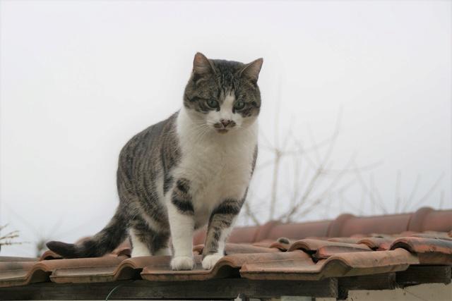 pour les amoureux des chats Dsc03718