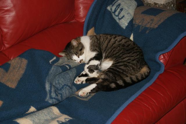 pour les amoureux des chats Dsc03719