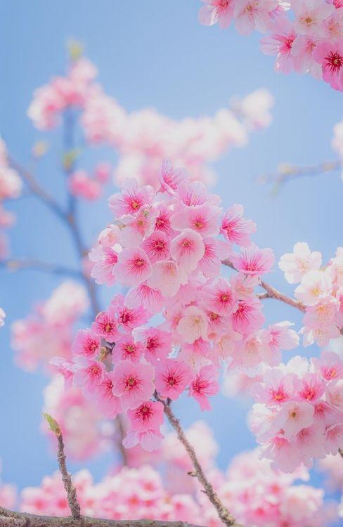 Fleurs de saison 8018c710