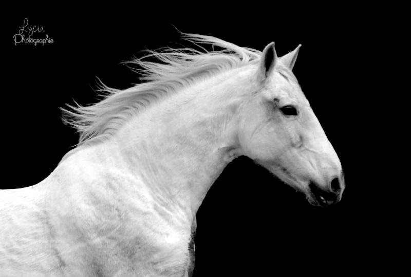 c'est le printemps !! immortaliser votre cheval pour de beaux souvenirs ! contactez moi :)  Dsc_0114