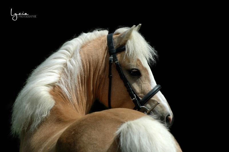 c'est le printemps !! immortaliser votre cheval pour de beaux souvenirs ! contactez moi :)  Dsc_1410