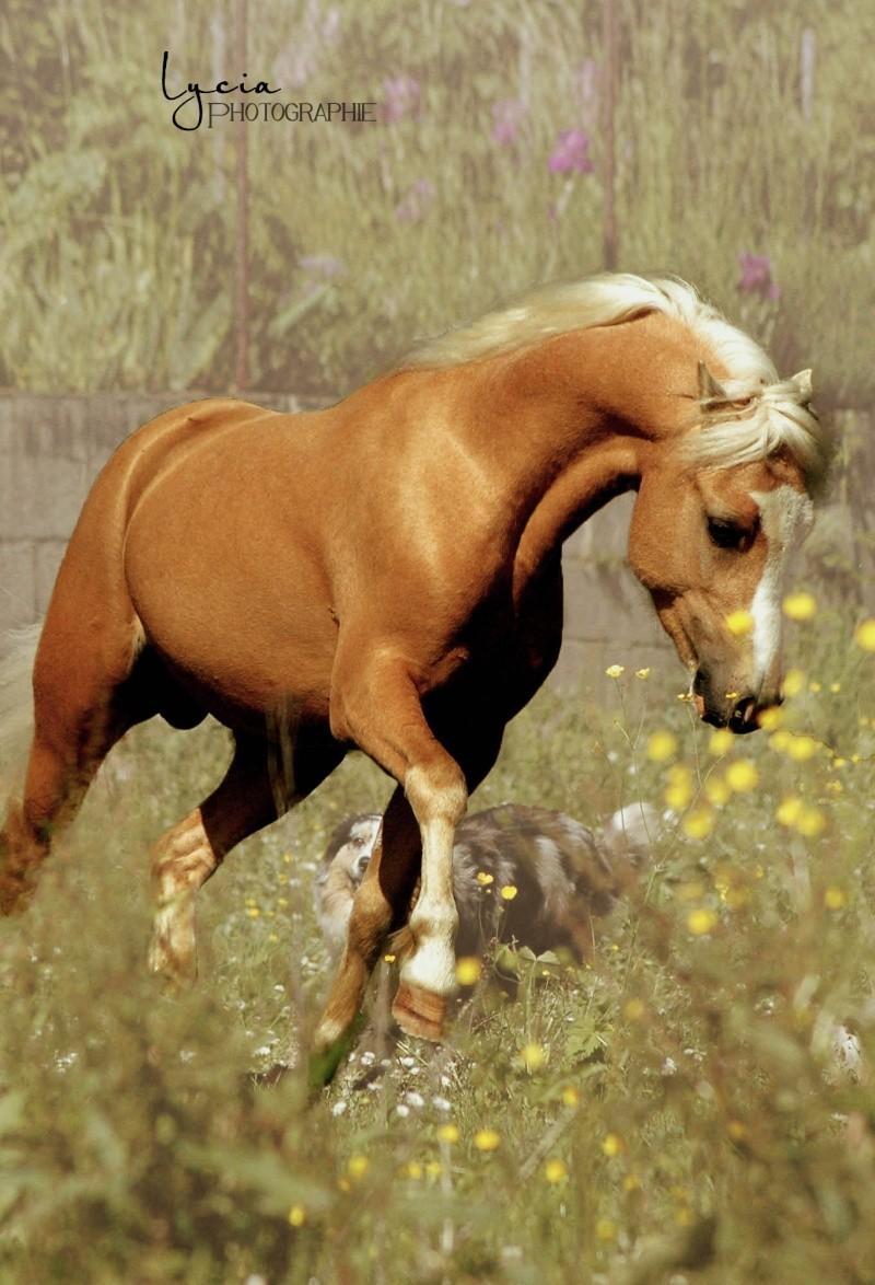 c'est le printemps !! immortaliser votre cheval pour de beaux souvenirs ! contactez moi :)  Dsc_1511