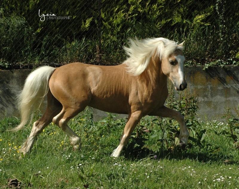 c'est le printemps !! immortaliser votre cheval pour de beaux souvenirs ! contactez moi :)  Dsc_1512