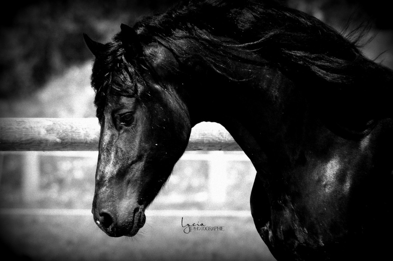 c'est le printemps !! immortaliser votre cheval pour de beaux souvenirs ! contactez moi :)  Dsc_1613