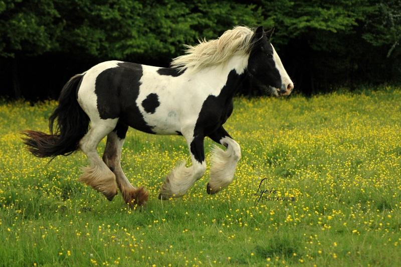 c'est le printemps !! immortaliser votre cheval pour de beaux souvenirs ! contactez moi :)  Dsc_2111
