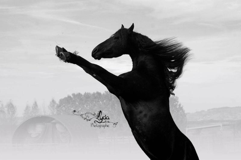 c'est le printemps !! immortaliser votre cheval pour de beaux souvenirs ! contactez moi :)  Dsc_7111