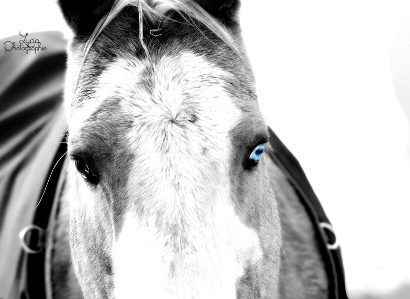 c'est le printemps !! immortaliser votre cheval pour de beaux souvenirs ! contactez moi :)  Dsc_7615