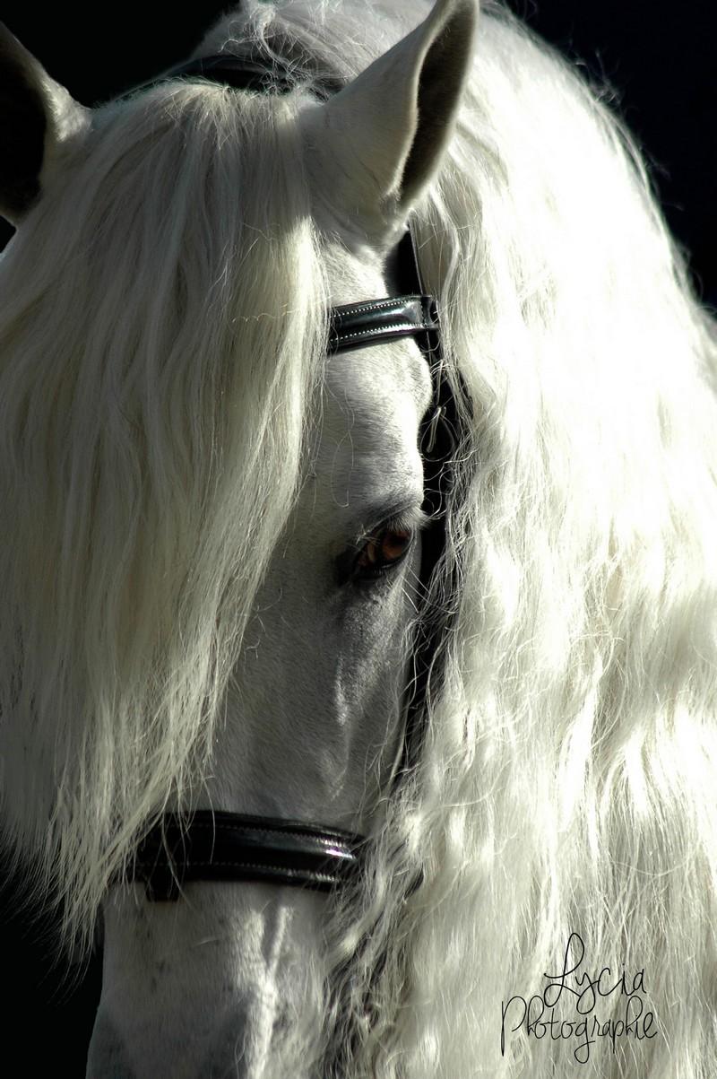 c'est le printemps !! immortaliser votre cheval pour de beaux souvenirs ! contactez moi :)  Dsc_8618