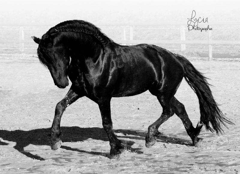 c'est le printemps !! immortaliser votre cheval pour de beaux souvenirs ! contactez moi :)  Dsc_9218