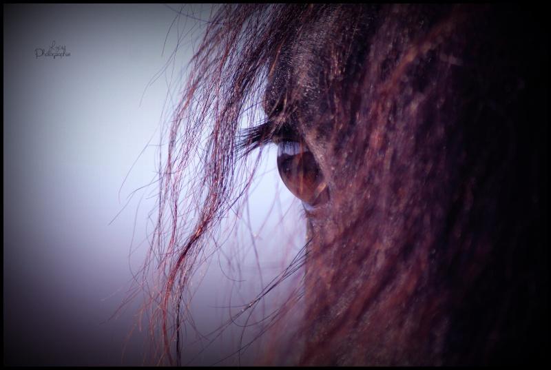 c'est le printemps !! immortaliser votre cheval pour de beaux souvenirs ! contactez moi :)  Img_8610