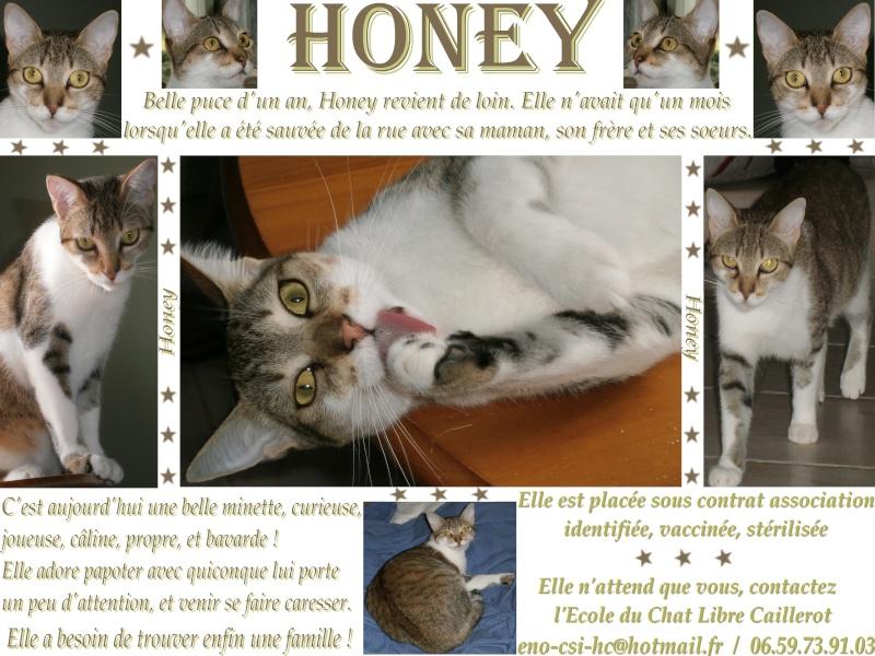 Honey - tigrée grise/blanche - née 09/2012 Honey10