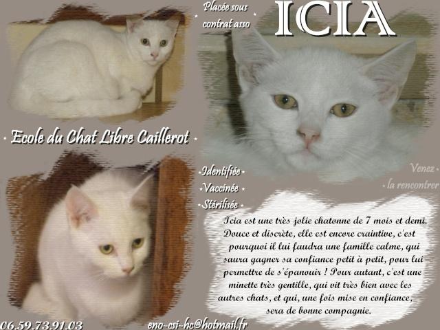 ICIA - Blanche - née 05/2013 Icia10