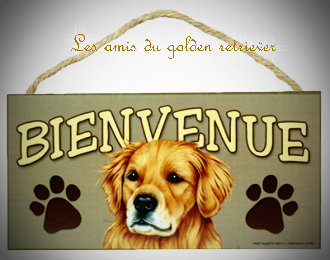 Le golden retriever : Le forum et le site du golden retriever. - Portail Www_ki12