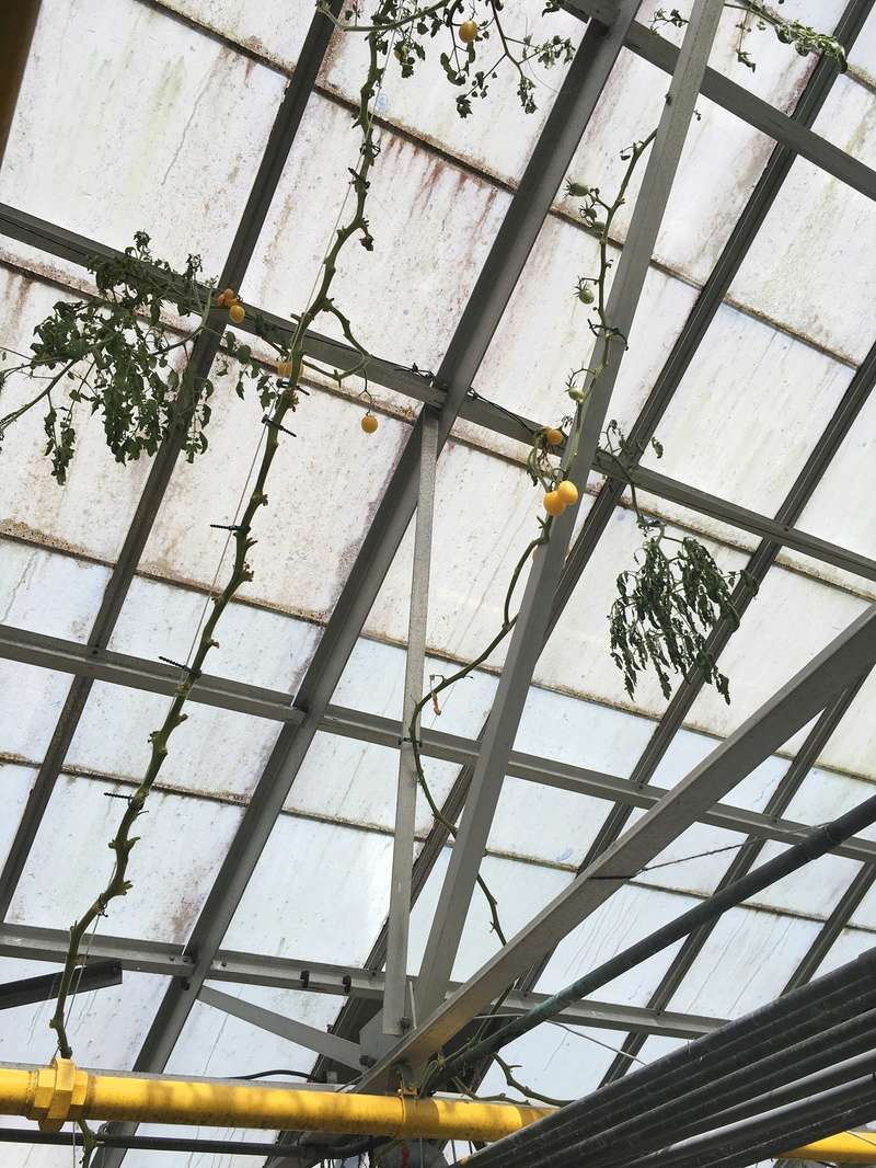 Hobby Greenhouse Tour - Wilmington, NC 2017-026