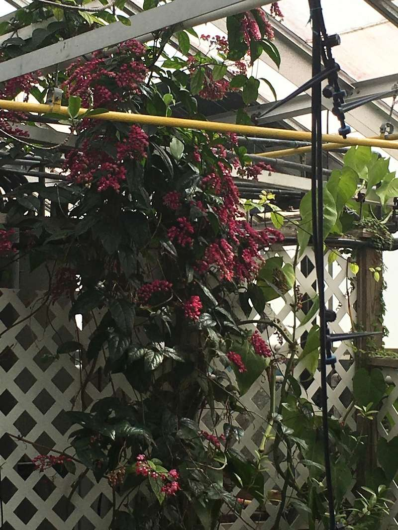 Hobby Greenhouse Tour - Wilmington, NC 2017-028