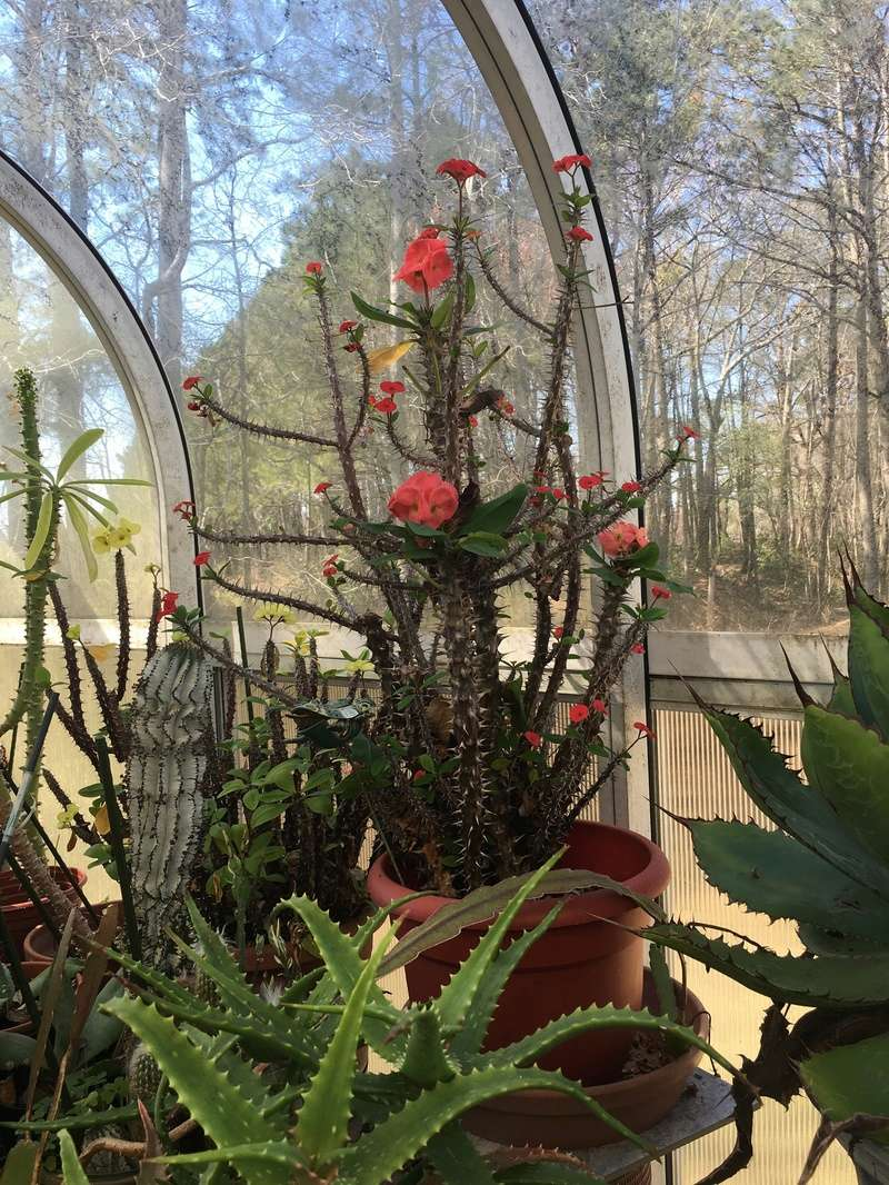 Hobby Greenhouse Tour - Wilmington, NC 2017-034
