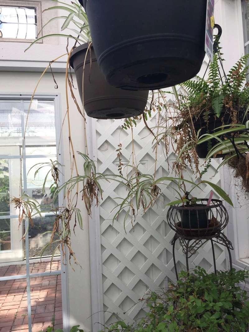 Hobby Greenhouse Tour - Wilmington, NC 2017-112