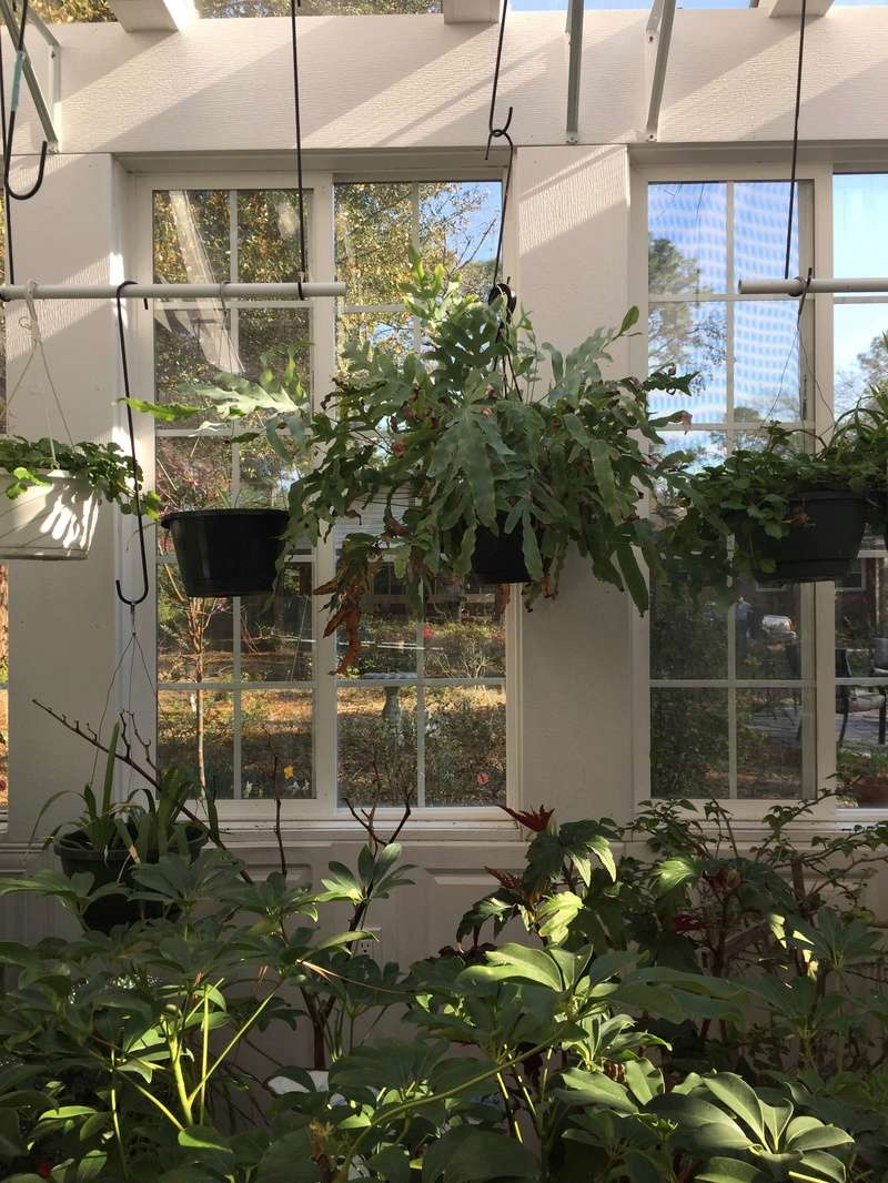 Hobby Greenhouse Tour - Wilmington, NC 2017-114