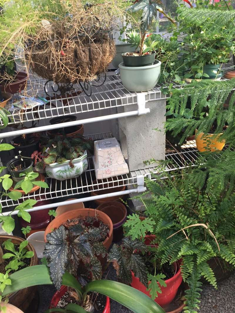 Hobby Greenhouse Tour - Wilmington, NC 2017-118
