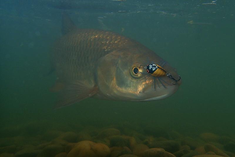 Sorties pêche Mai  Chubno11