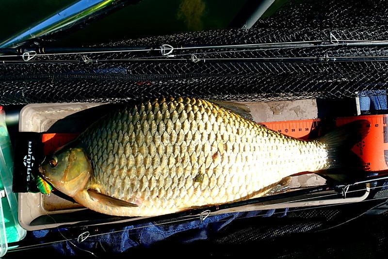 Sorties pêche Juin Monstr10