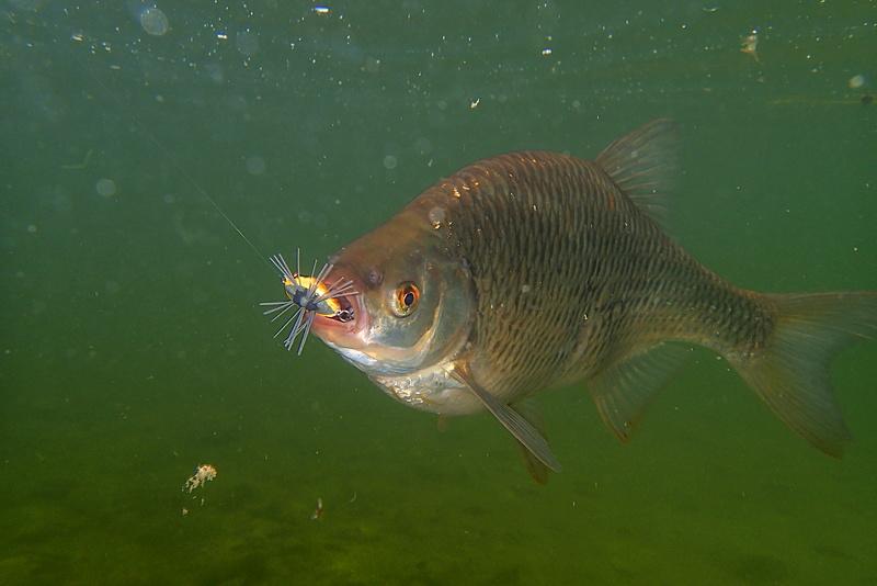 Sorties pêche Mai  Notote10