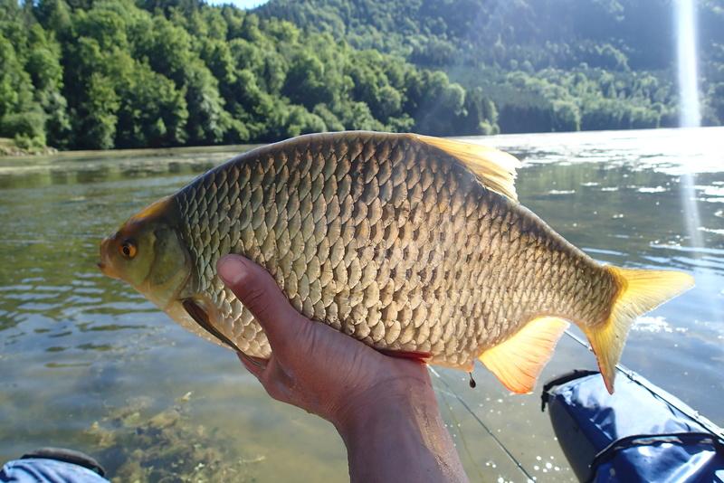 Sorties pêche Juin P6183413