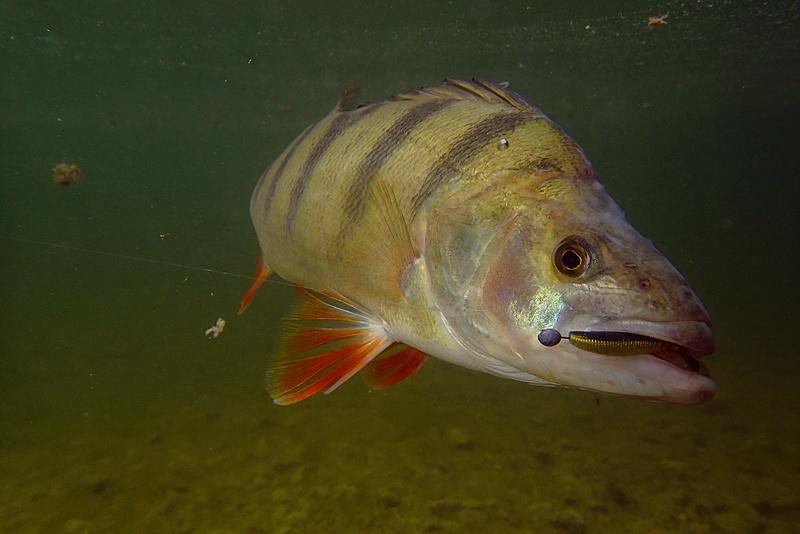Sorties pêche Mai  Perche13