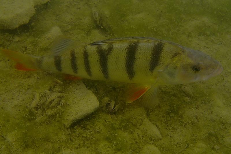 Sorties pêche Mai  Perche14