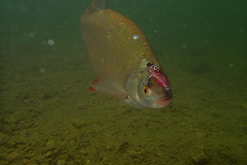 Sorties pêche Mai  Roteng13