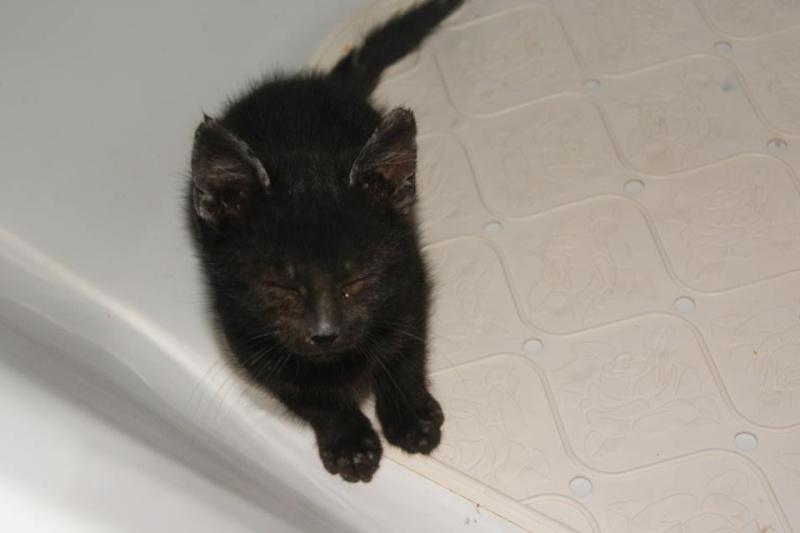 Dora, adorable petite puce aveugle, née mi août 2013 adoptée dans le 59 13751110