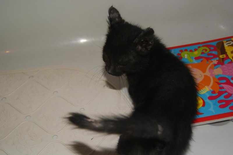 Dora, adorable petite puce aveugle, née mi août 2013 adoptée dans le 59 13853410