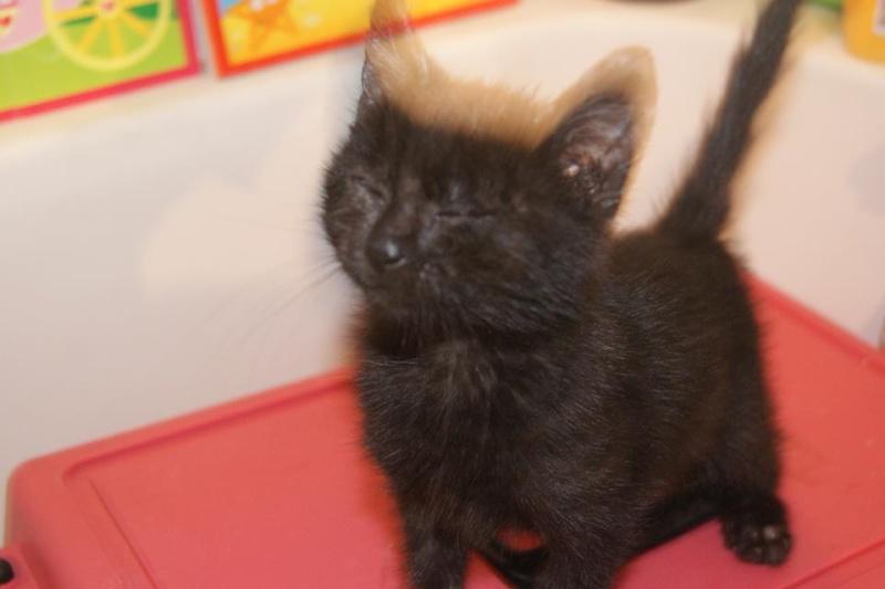 Dora, adorable petite puce aveugle, née mi août 2013 adoptée dans le 59 13904710